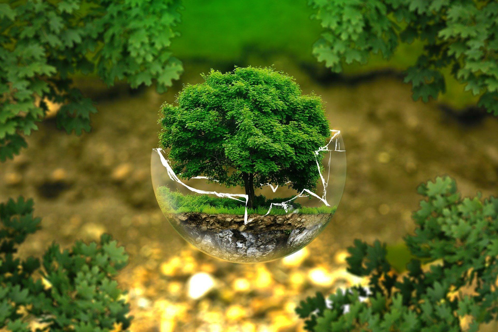 definition transition écologique et solidaire